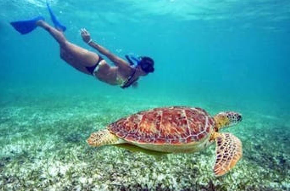 St. Thomas Maho Bay Turtle Snorkle Sail