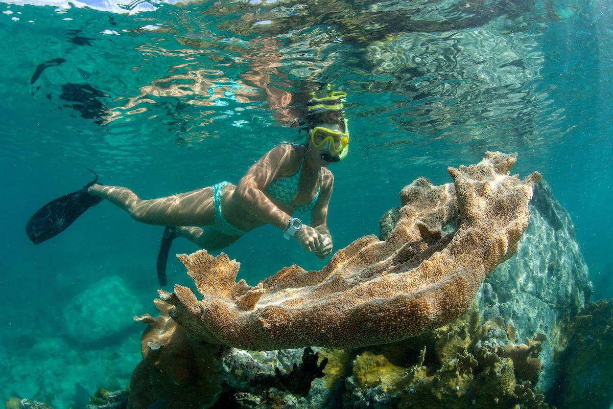 Gilligans-Three-Hour-Snorkel-Tour-image-4