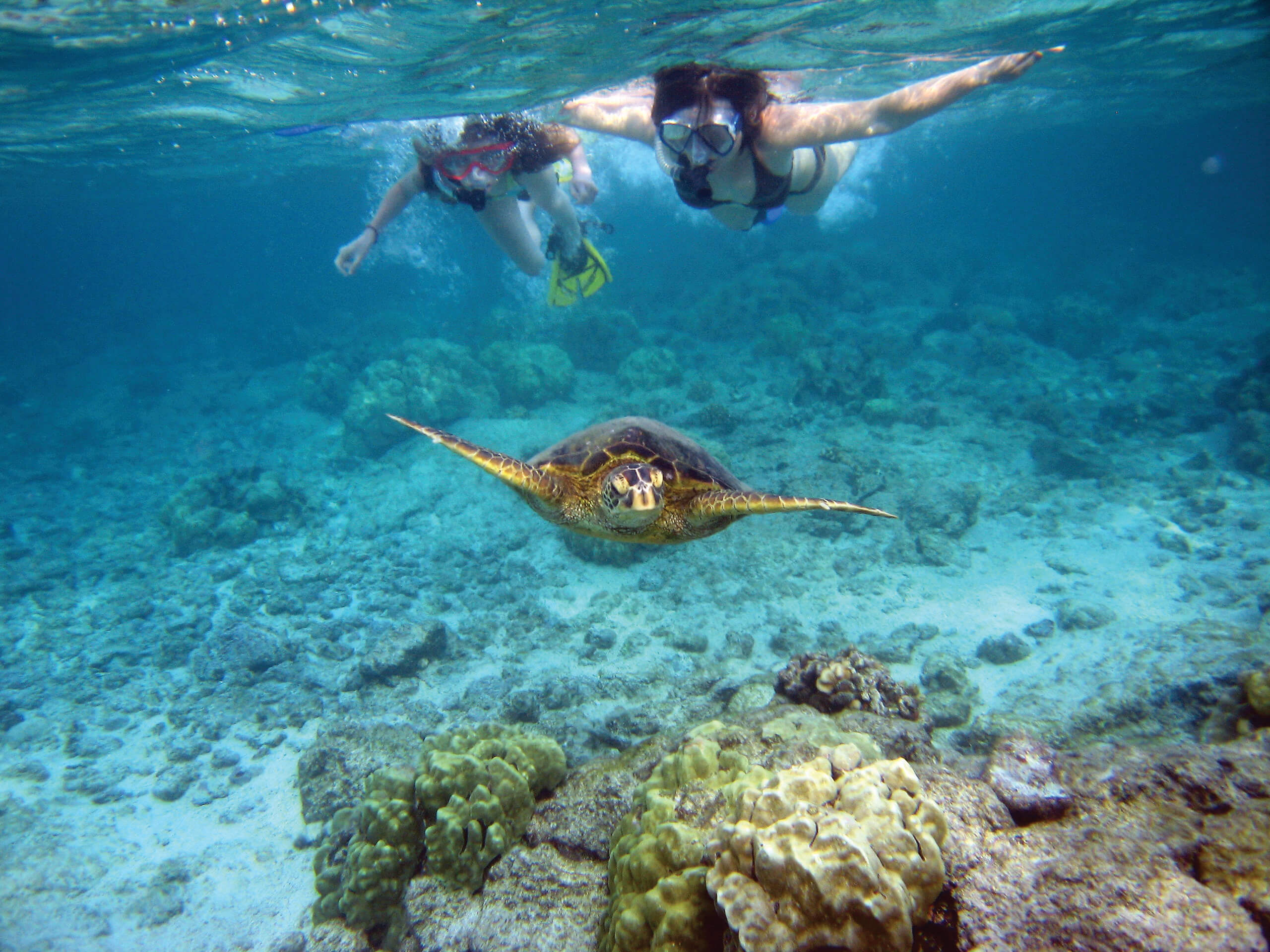 Snorkelers_with_sea_turtle-cmyk